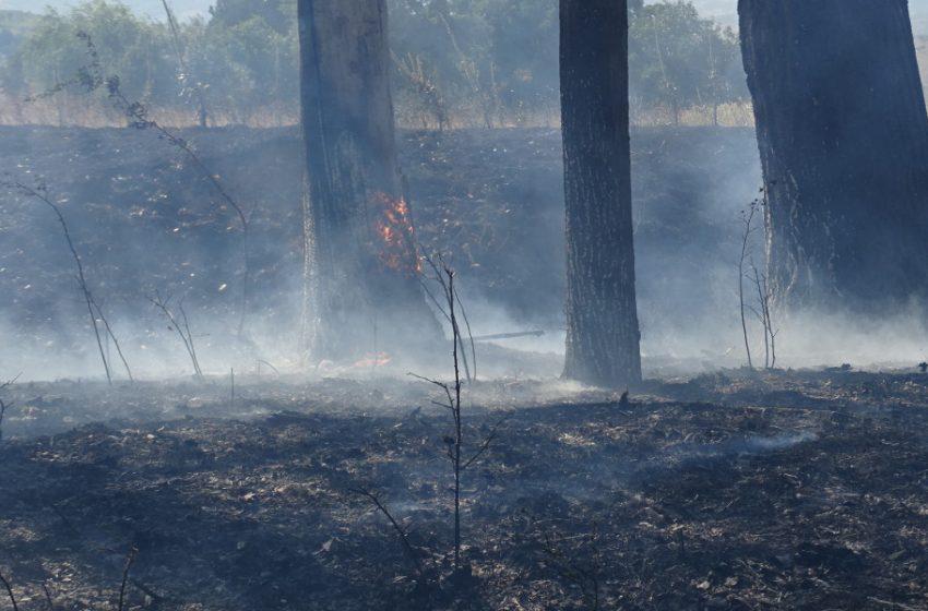 Разраства се пожарът над село Югово в Родопите